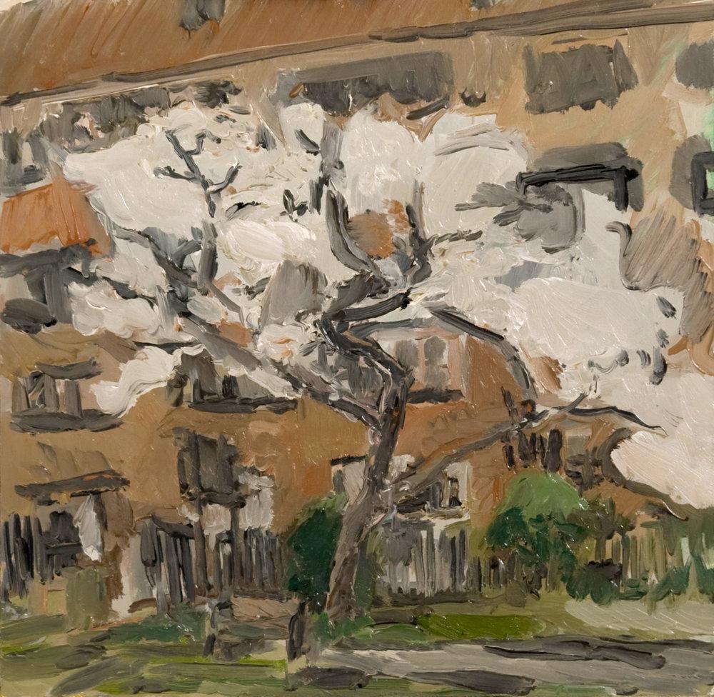 """Cherry Tree"" 2014   Oil on board. 35 x 36 cm"