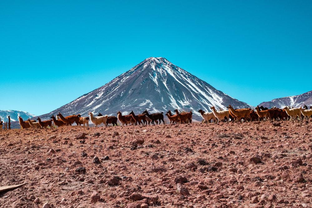 Atacama-Desert---Jesse-Echevarría-(17-of-22).jpg