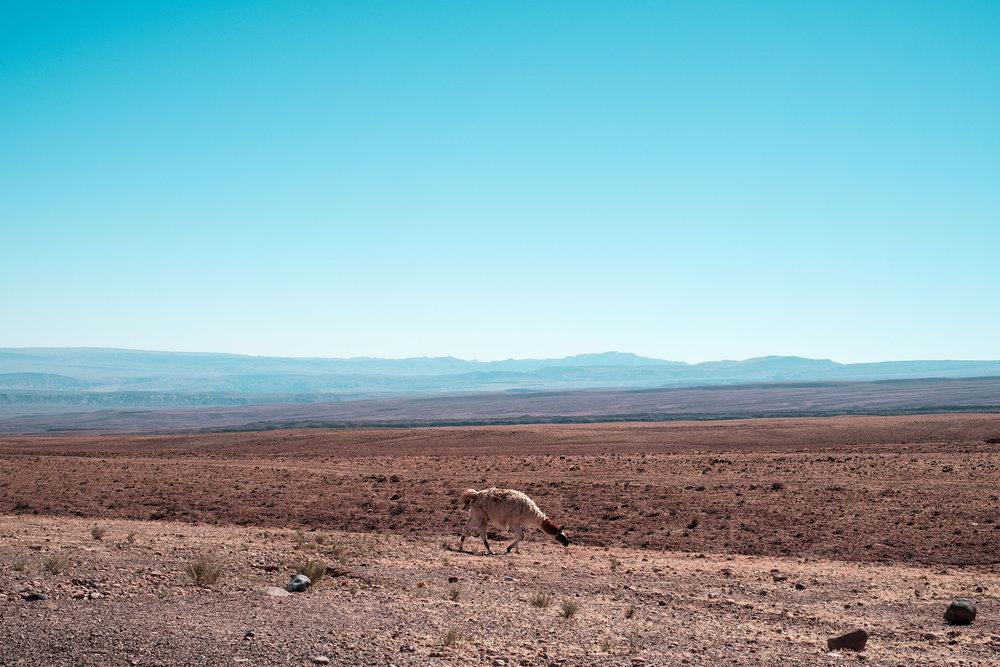 Atacama-Desert---Jesse-Echevarría.jpg