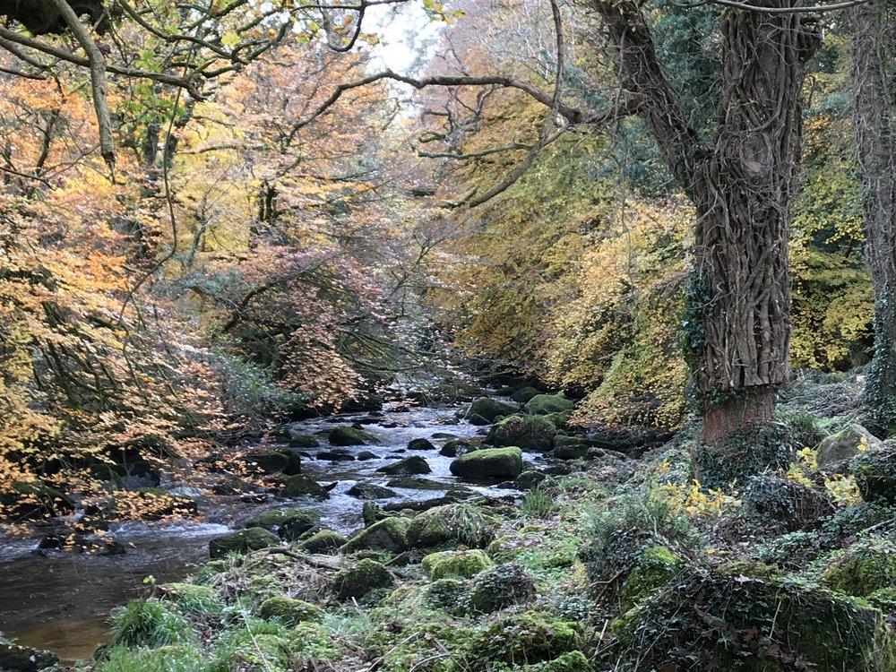 River Teign autumn