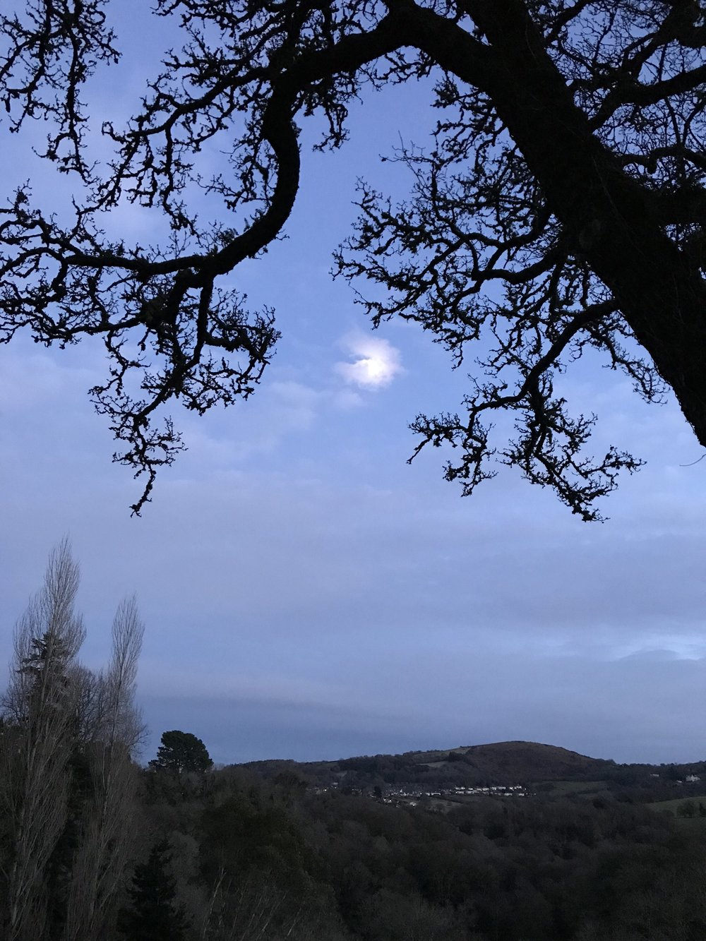 Moon appearing through the trees as the old year fades