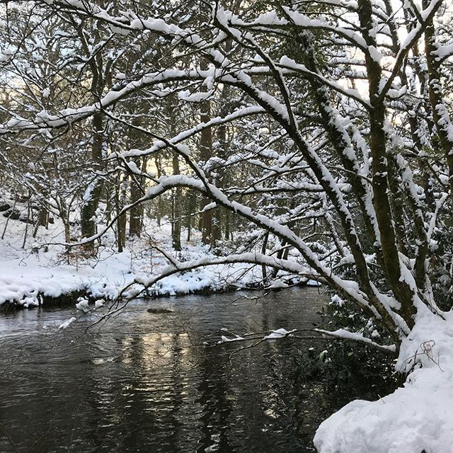 Lovely walk by River Teign through snowy woods this evening