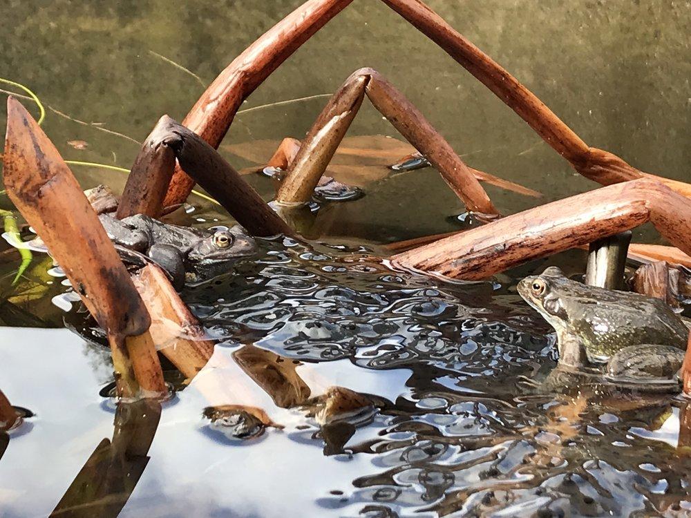 closer frogs_Mar15.jpg