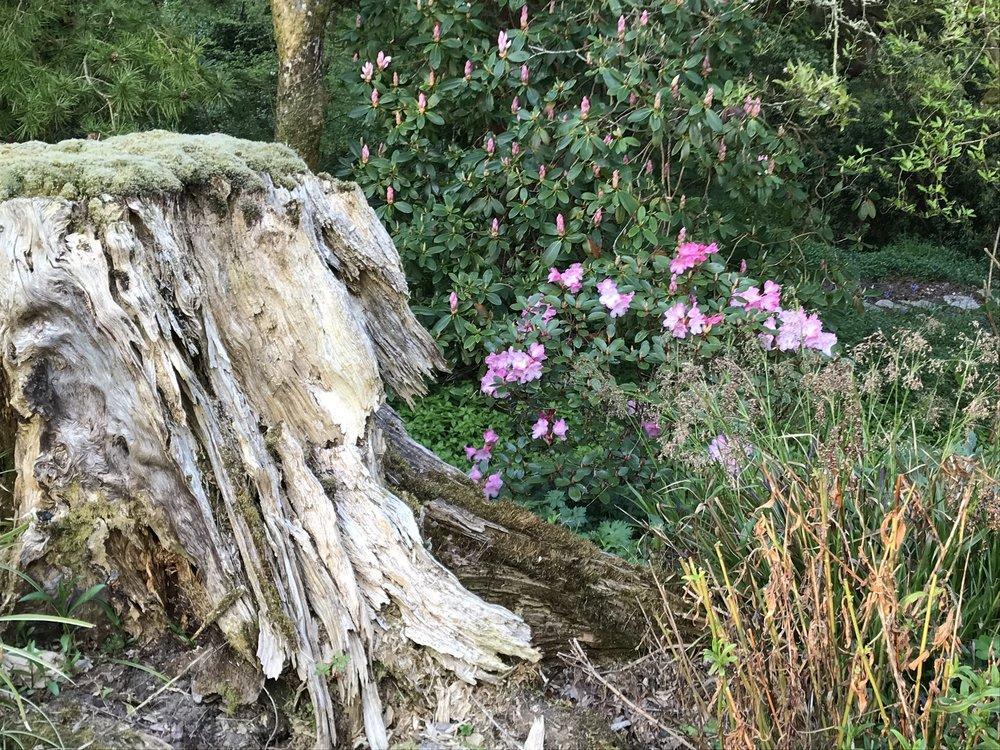 treestump&pink5.jpg