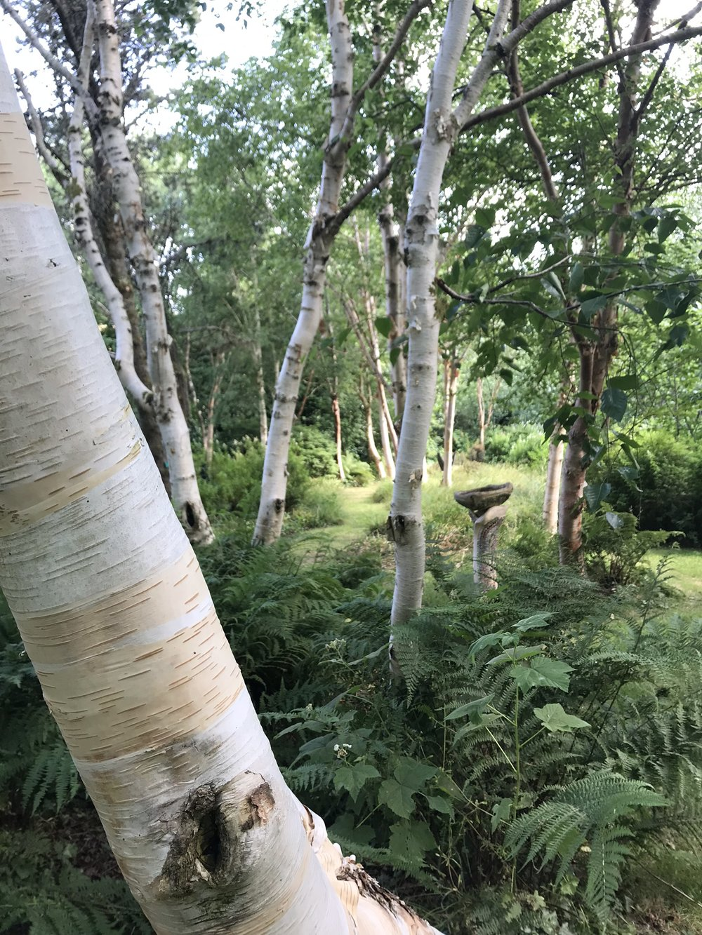 birches&bbath_IMG_6041.jpg