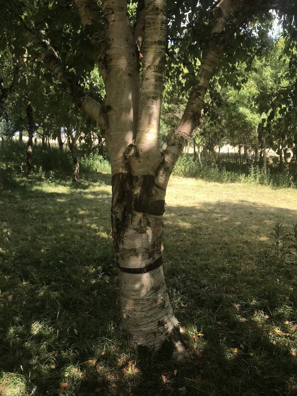 treeas sculptIMG_5988.jpg
