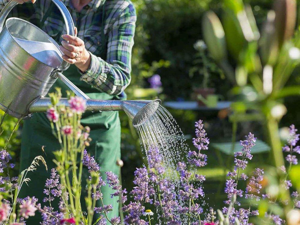 gardening-for-health.jpg