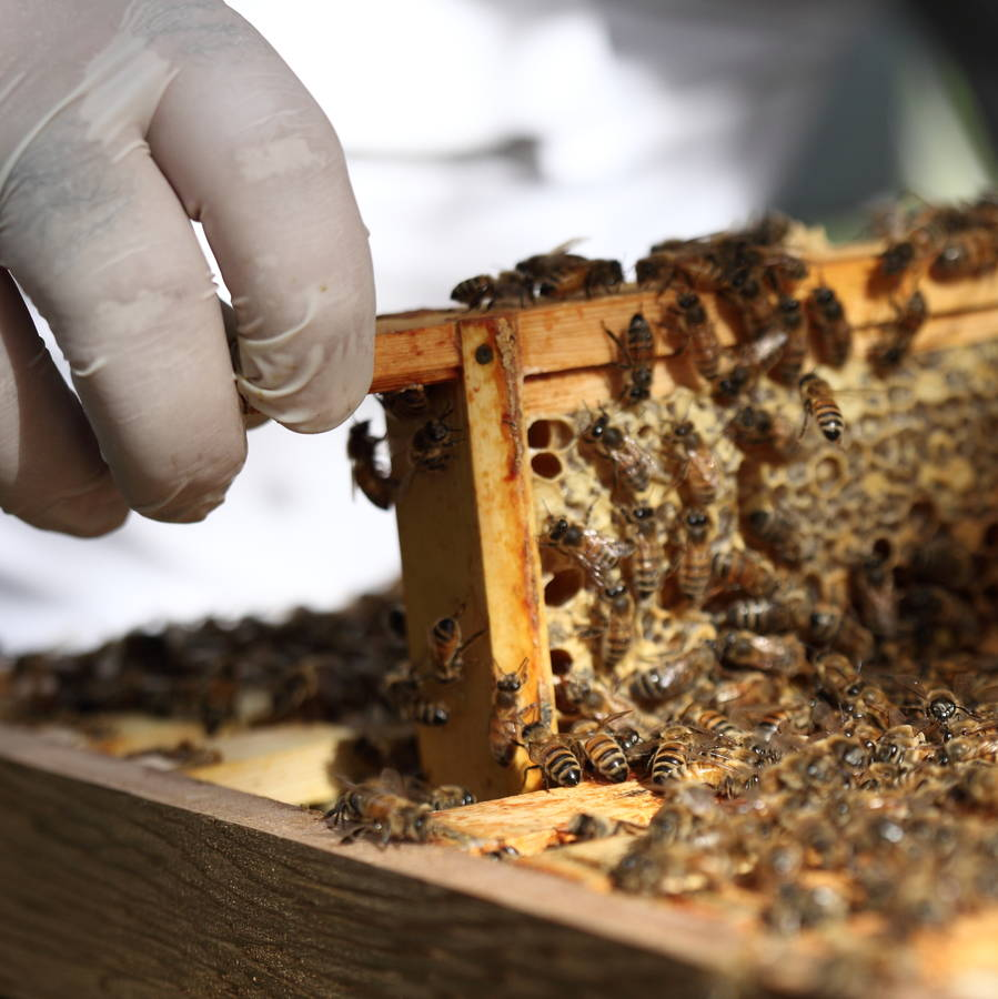 original_urban-beekeeping-experience-with-craft-beer-tasting.jpg