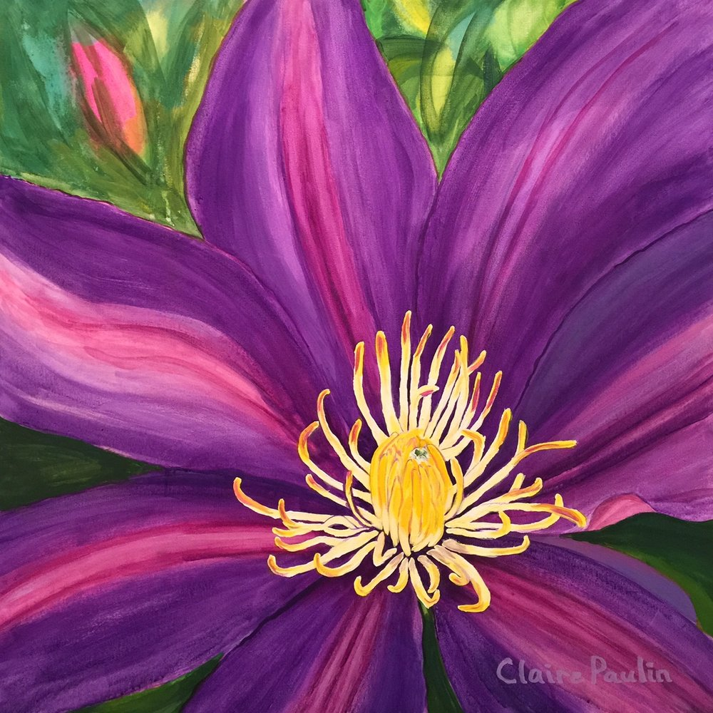 CLEMATIS   ACRYLIC ON CANVAS  30″ X 30″