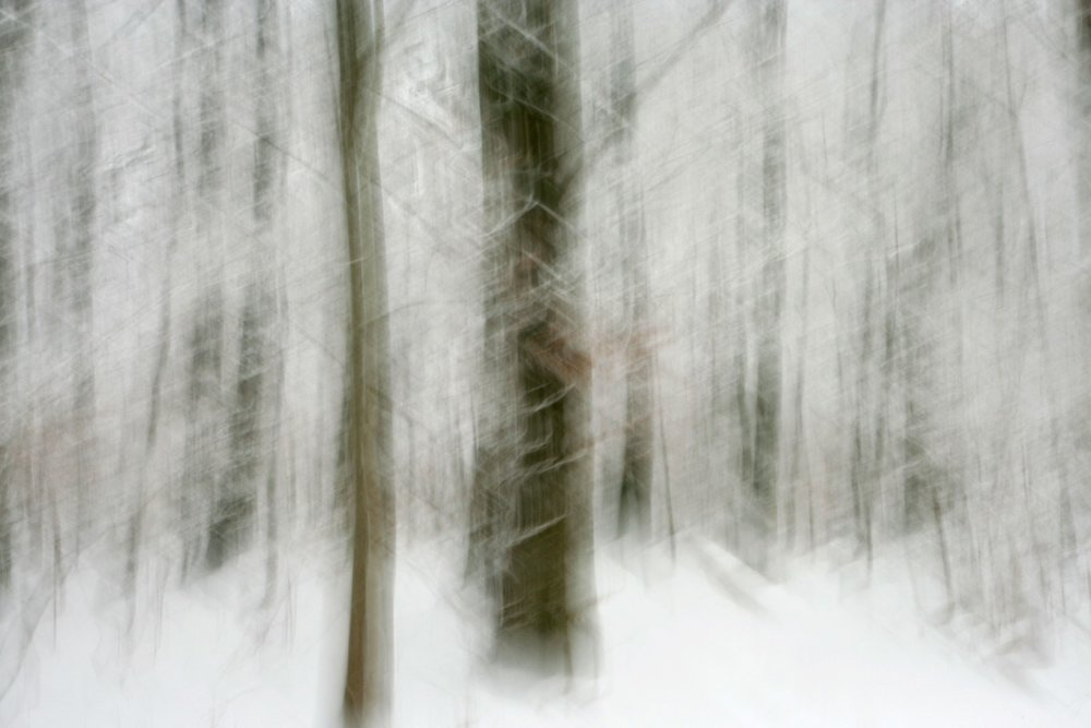 Frosty Söderskog
