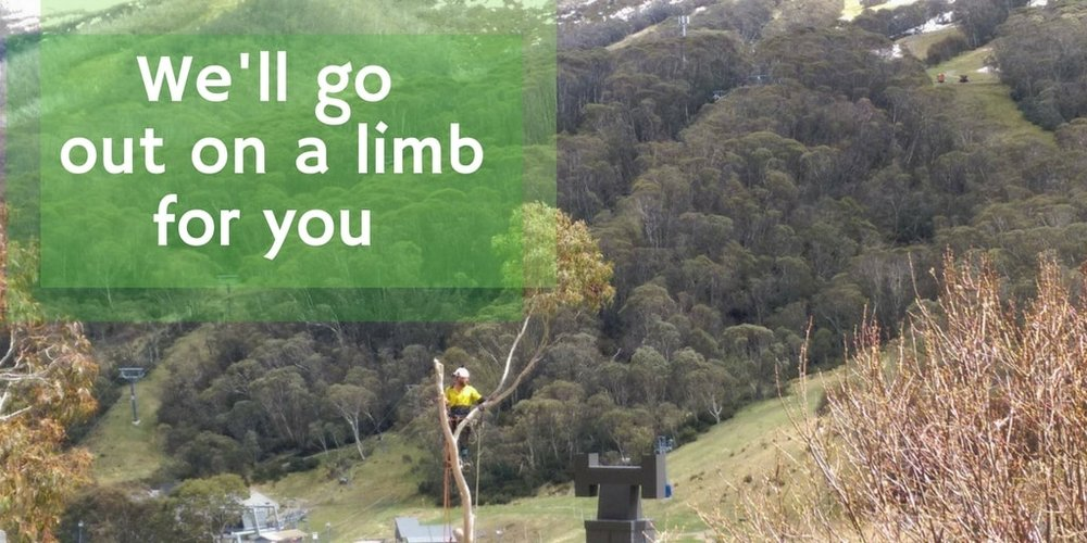 KTS Tree Services in Southern NSW will go out on a limb for you.