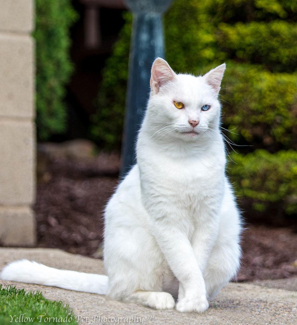 wihite cat.jpg