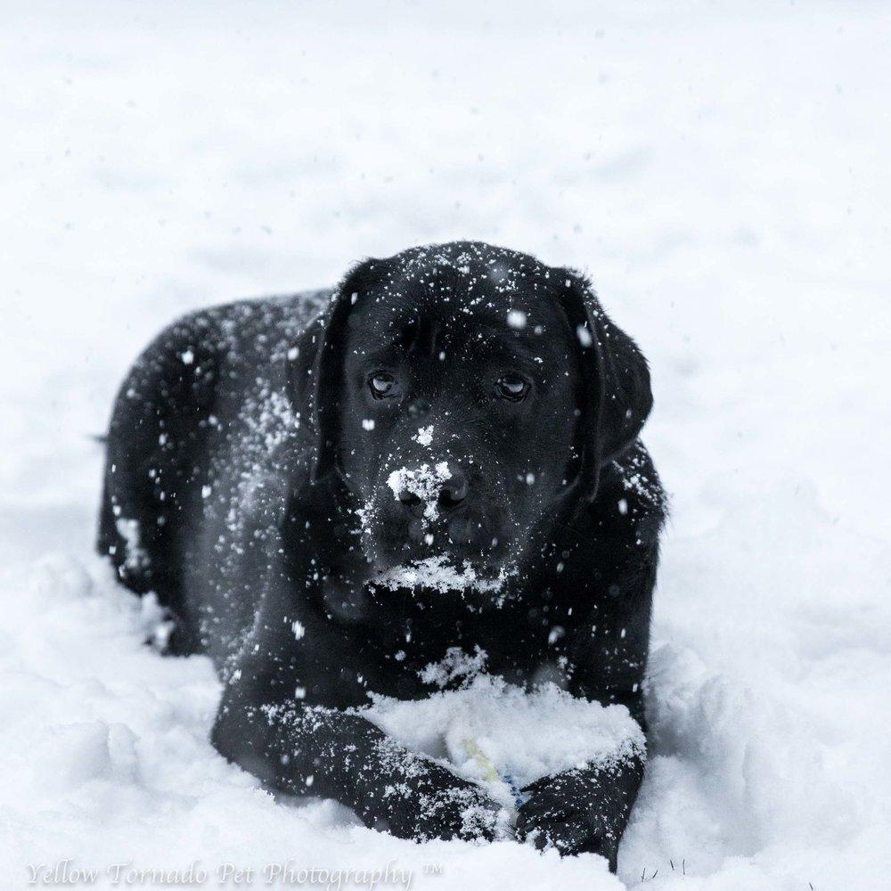 Zyr in the snow.jpg