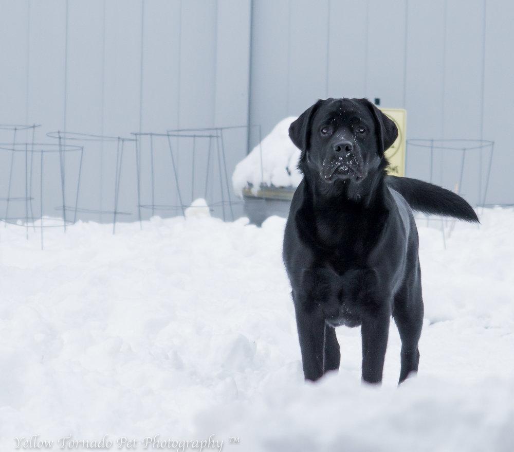 Zyr standing in the snow.jpg