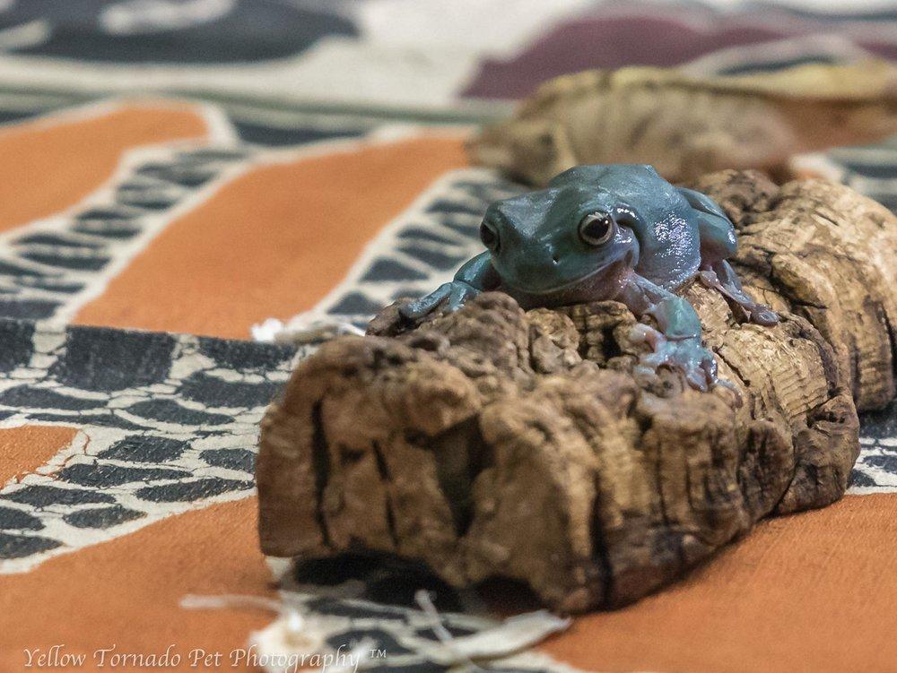 animal embassy frog.jpg