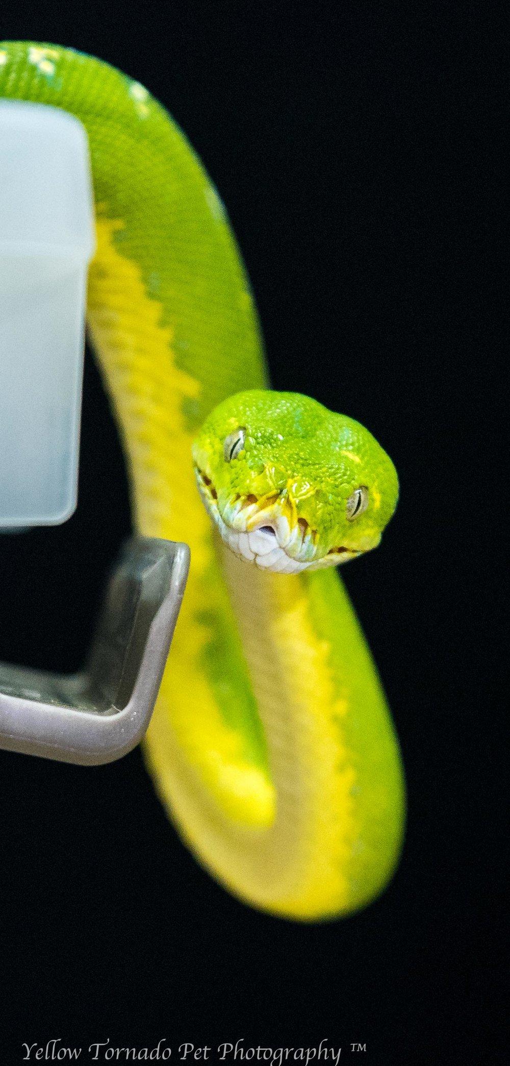animal embassy snake.jpg