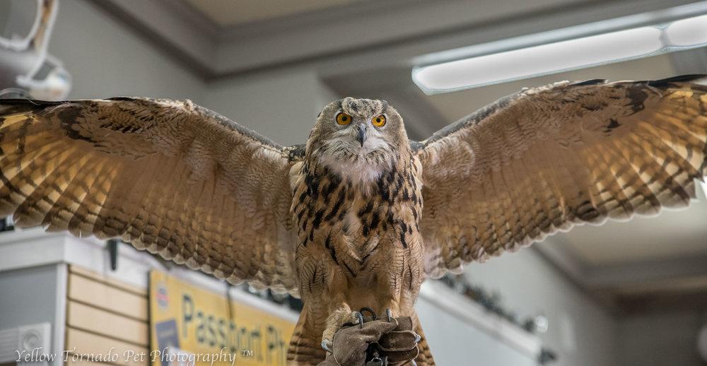 animal embasy owl.jpg