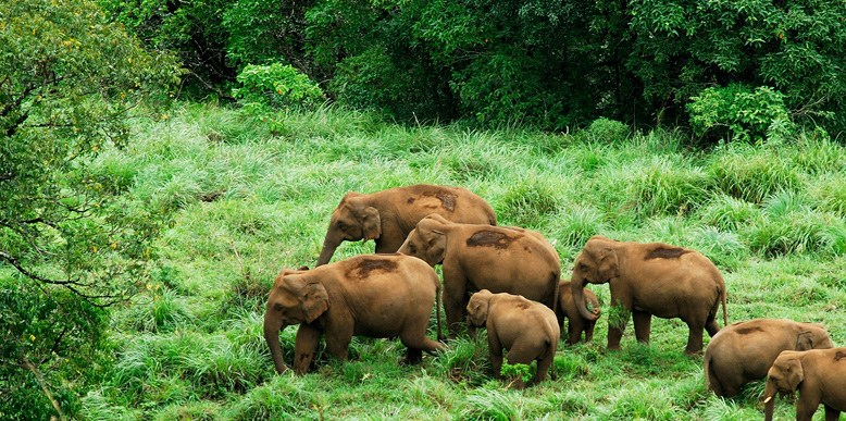 Elephants at Periyar Wildlife Sanctuary.