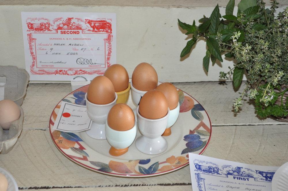 Pavilion - Show eggs.JPG