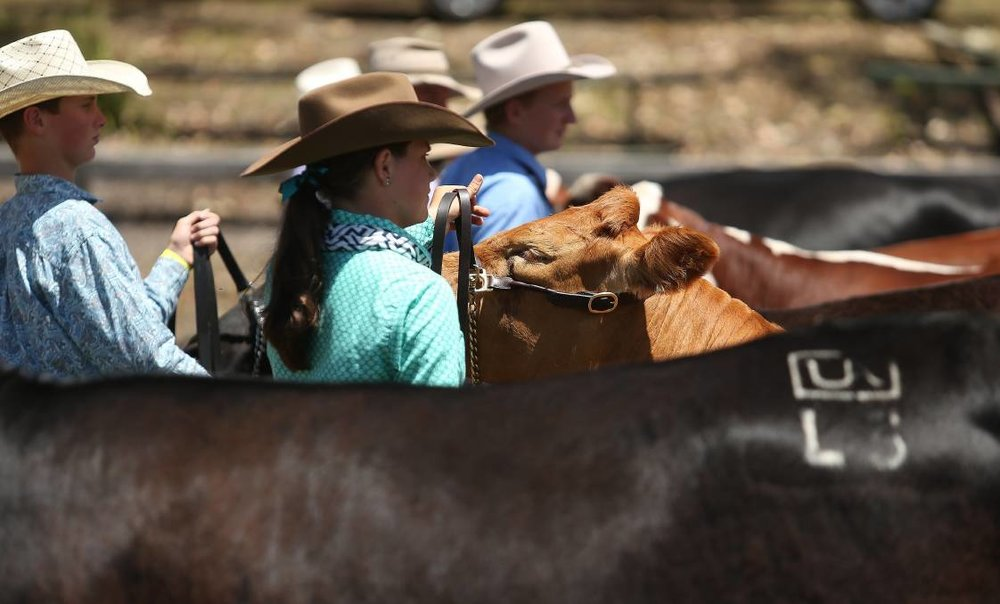 Dungog Show Cattle Paraders 2016.jpg