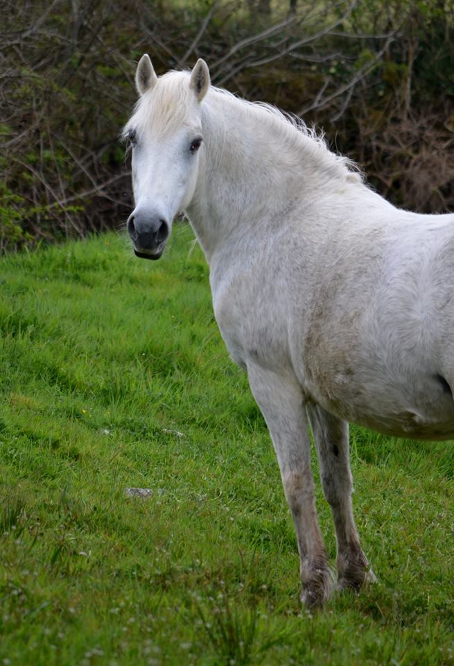 horse 02.jpg