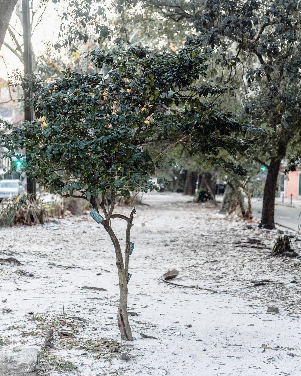 Snow in New Orleans Kallistia Photography-2.jpg