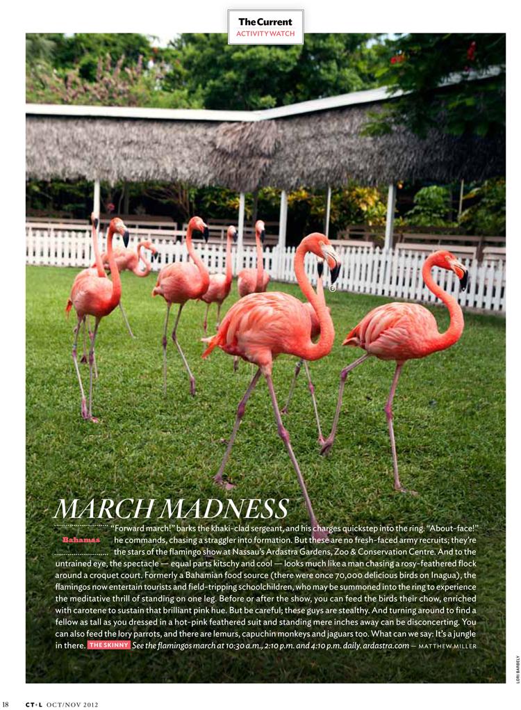 flamingos-nassau-bahamas