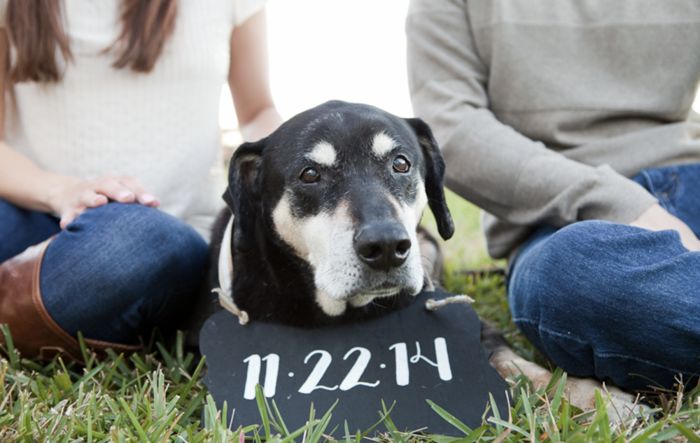 Pets make a fun addition to engagement photo shoots.