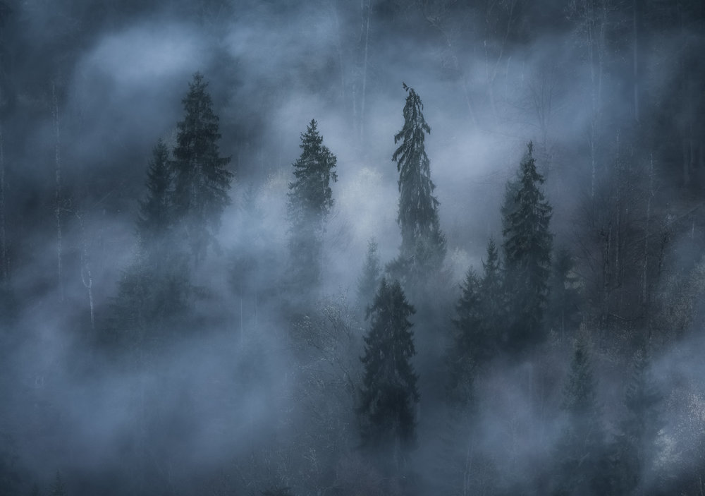 Low clouds + trees + a tele-photo zoom lens is a winning combination for some moody and unique captures