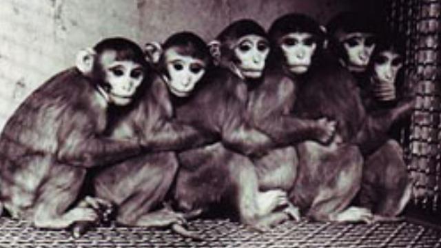Monkey Love - CHANNEL 4