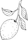 KM - Lemon.jpg