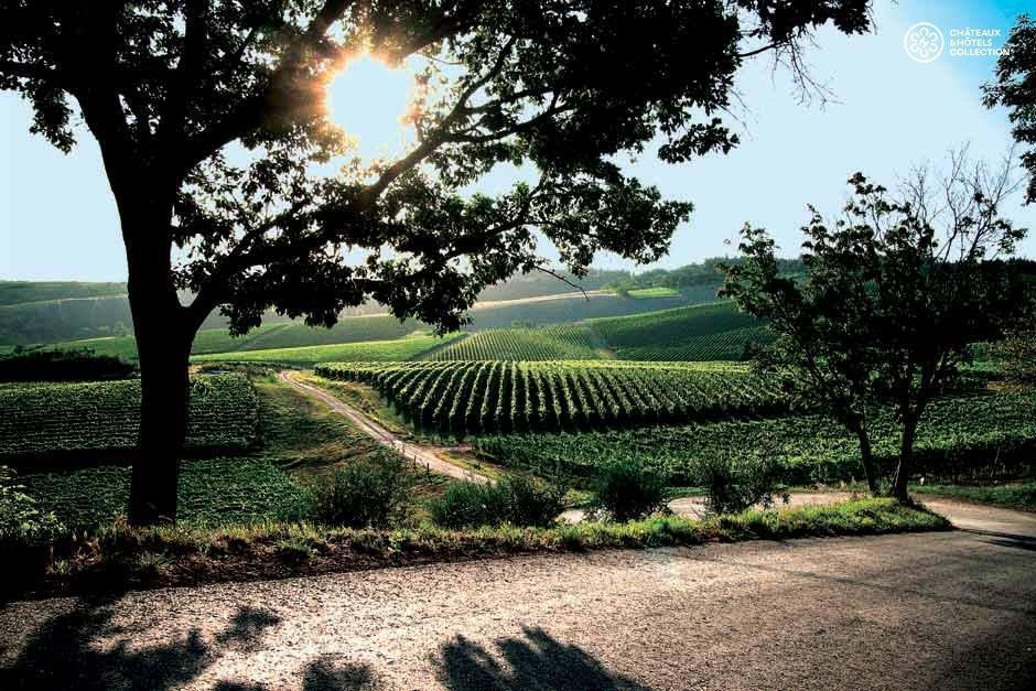 Borgo-Conde-Wine-Resort-photos-Exterior-Vineyards.jpeg