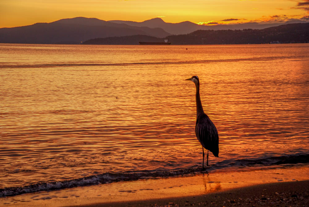 English-Bay-Vancouver-Heron-Sunset-.jpg