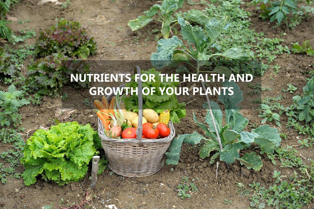 NutrientsMainPage.jpg
