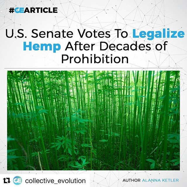 Last Thursday, June 29th, the U.S. Senate approved a bill to legalize hemp, an industrial crop that has been banned for decades.⠀⠀⠀⠀⠀⠀⠀⠀⠀ ⠀⠀⠀⠀⠀⠀⠀⠀⠀ Senators Mitch McConnell, Rand Paul, Ron Wyden and Jeff Merkley submitted a separate bill to legalize industrial hemp and those provisions were then incorporated into the broader farm bill. The Senate Committee on Agriculture, Nutrition and Forestry approved that version before the upper levels of Congress voted to approve it this past week with a margin of 86-11. This bill will legalize the cultivation, processing, and sale of hemp.⠀⠀⠀⠀⠀⠀⠀⠀⠀ ⠀⠀⠀⠀⠀⠀⠀⠀⠀ FYI, Industrial Hemp Will Not Get You High⠀⠀⠀⠀⠀⠀⠀⠀⠀ It is important to note that industrial hemp has been prohibited for cultivation in the United States for nearly 50 years, and really, for no good reason. Industrial hemp does not contain enough THC to cause a psychoactive effect, and will not get you high. On the other hand, the beneficial uses of industrial hemp are plentiful. Some of these uses include hempcrete, biodegradable hemp plastics, food source, fuel, textiles, personal care products, insulation, shoes and many more, as listed on the image below.⠀⠀⠀⠀⠀⠀⠀⠀⠀ ⠀⠀⠀⠀⠀⠀⠀⠀⠀ Click the link in our bio to read the full article.⠀⠀⠀⠀⠀⠀⠀⠀⠀ ⠀⠀⠀⠀⠀⠀⠀⠀⠀ Article by @alannamaelove⠀⠀⠀⠀⠀⠀⠀⠀⠀ ⠀⠀⠀⠀⠀⠀⠀⠀⠀ #CE #CEArticle #collectiveevolution #repost @collective_evolution