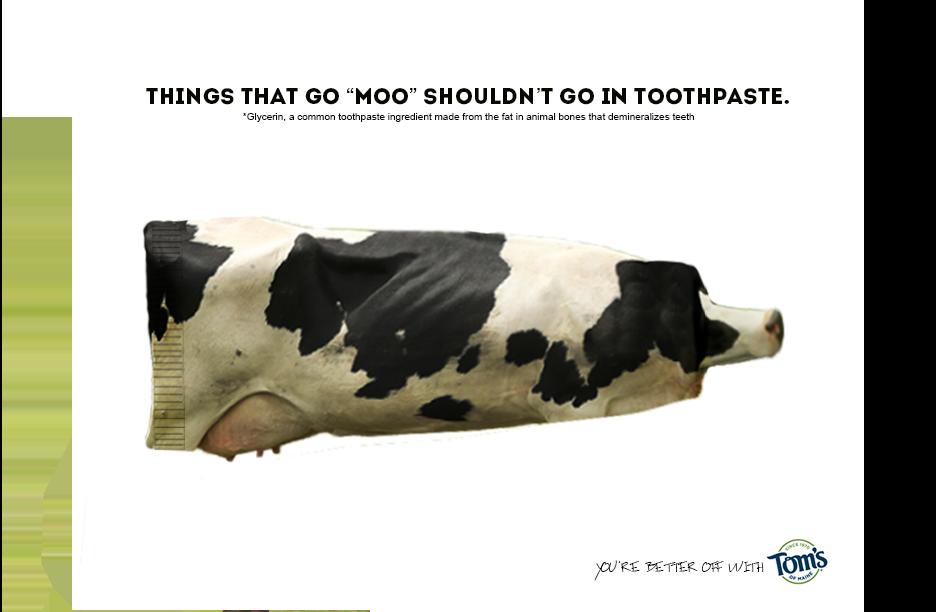 toms - cow caption.png
