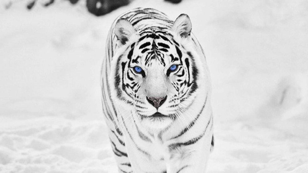 Tigereum ICO
