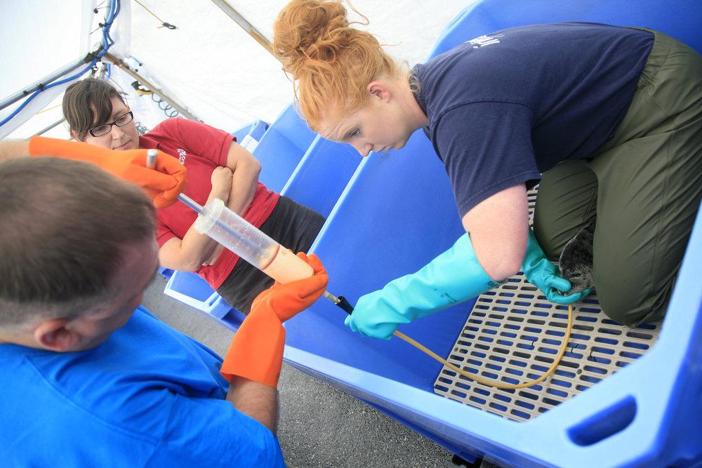 MMR Harbour Seal Feeding.jpg
