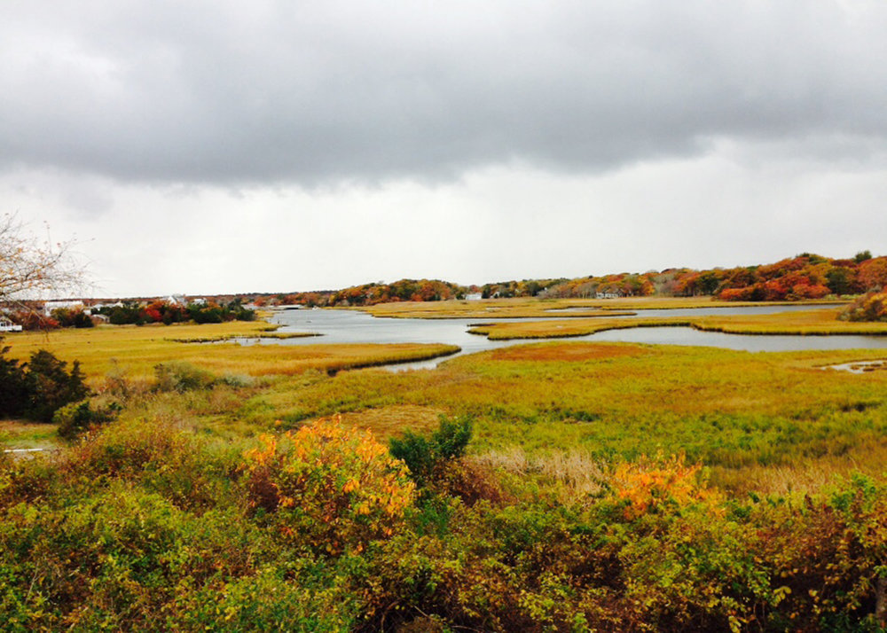 CRC Marsh Postcard.jpg