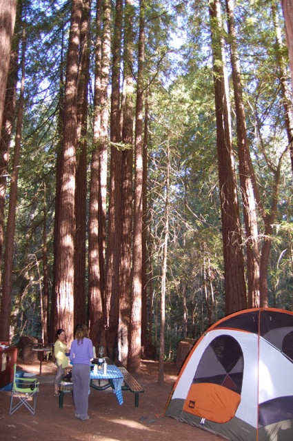 WOLF School Summer Camp in the Redwoods.JPG