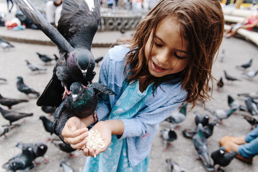 5-year-old Lia feeds the pigeons at Plaza Juan Mora Fernández outside of El Teatro Nacional de Costa Rica in San José, Costa Rica on Wednesday, March 15th, 2017.