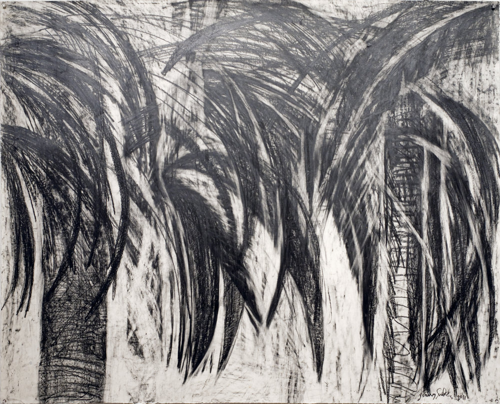Jenny Snider,  Dark Palms,  graphite on paper, 36h x 44.5w in.