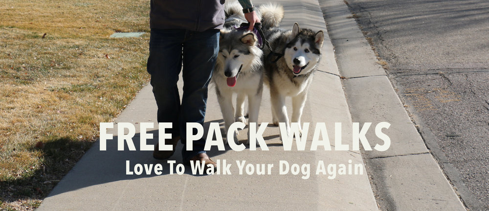 packwalkweb.jpg