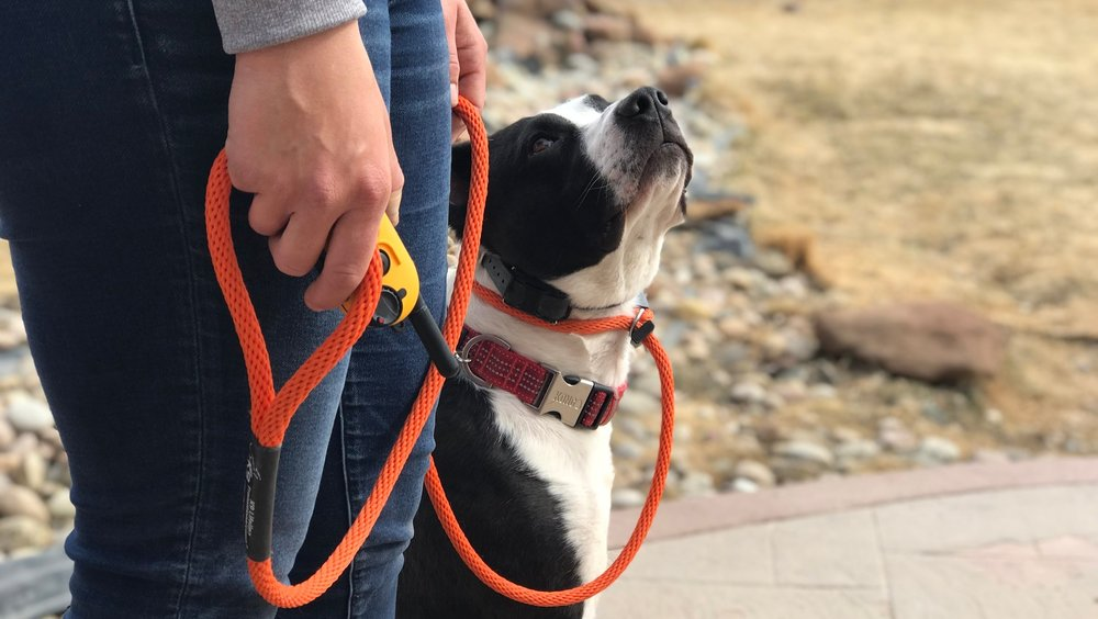 E-COLLAR TRAINING -