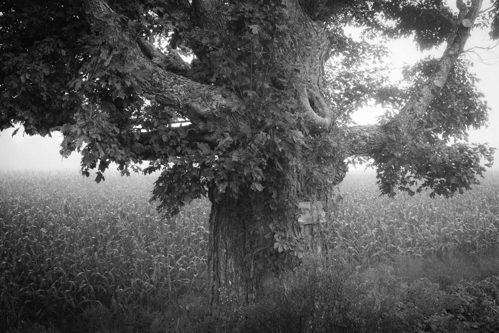 Johan Selmer-Larsen Photography