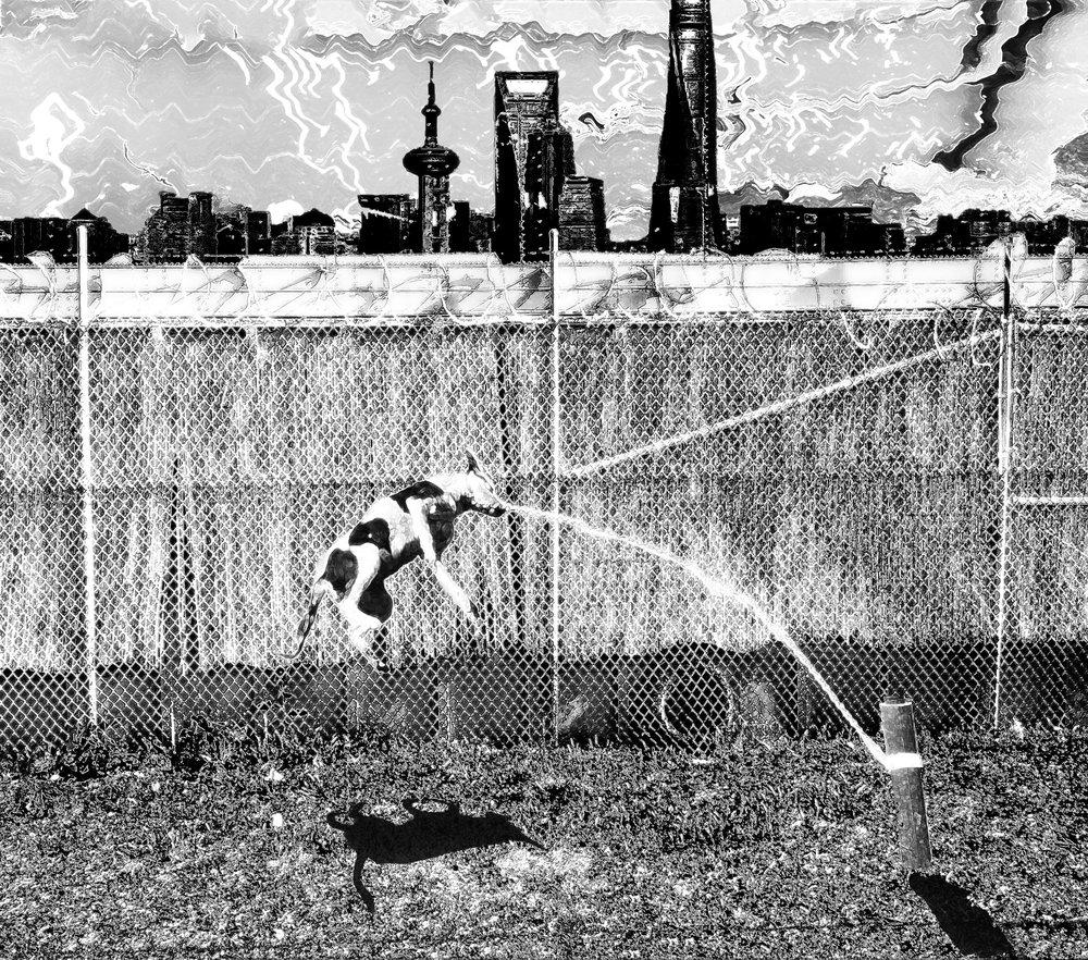 junkyard dog on the city limits.jpg