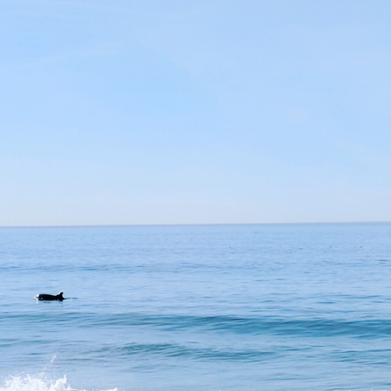 A whale off of Newport Beach.