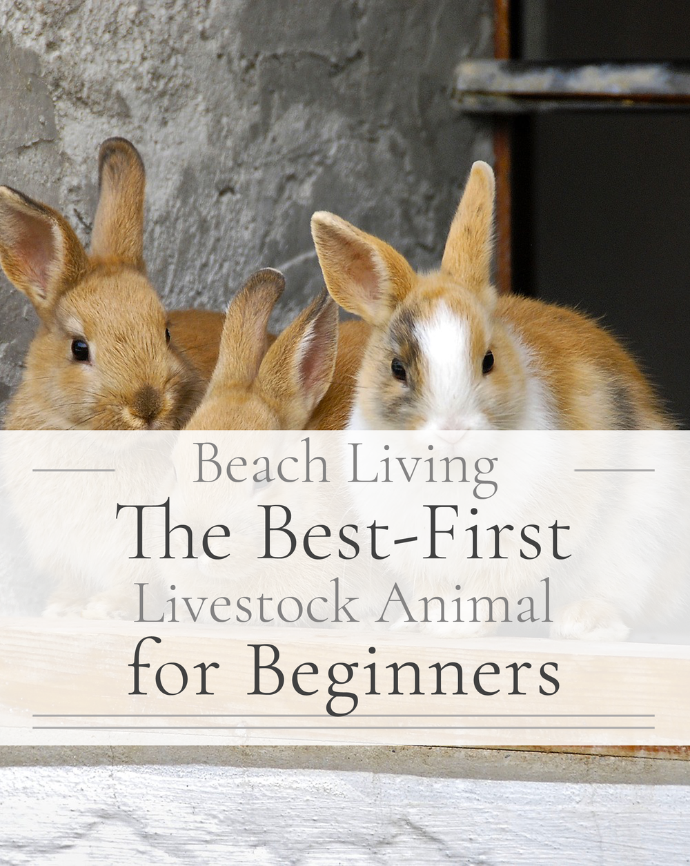 The best first livestock animal for beginners.png