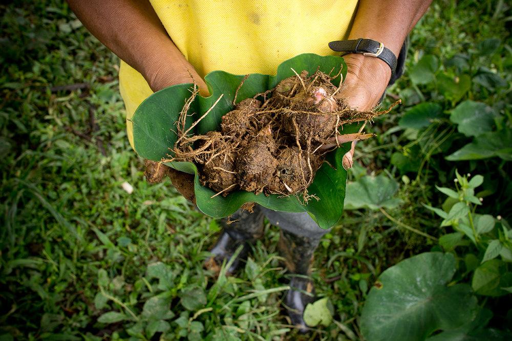 03_03_Agroecology_MijailVallejo_mishavallejo@gmailcom.JPG