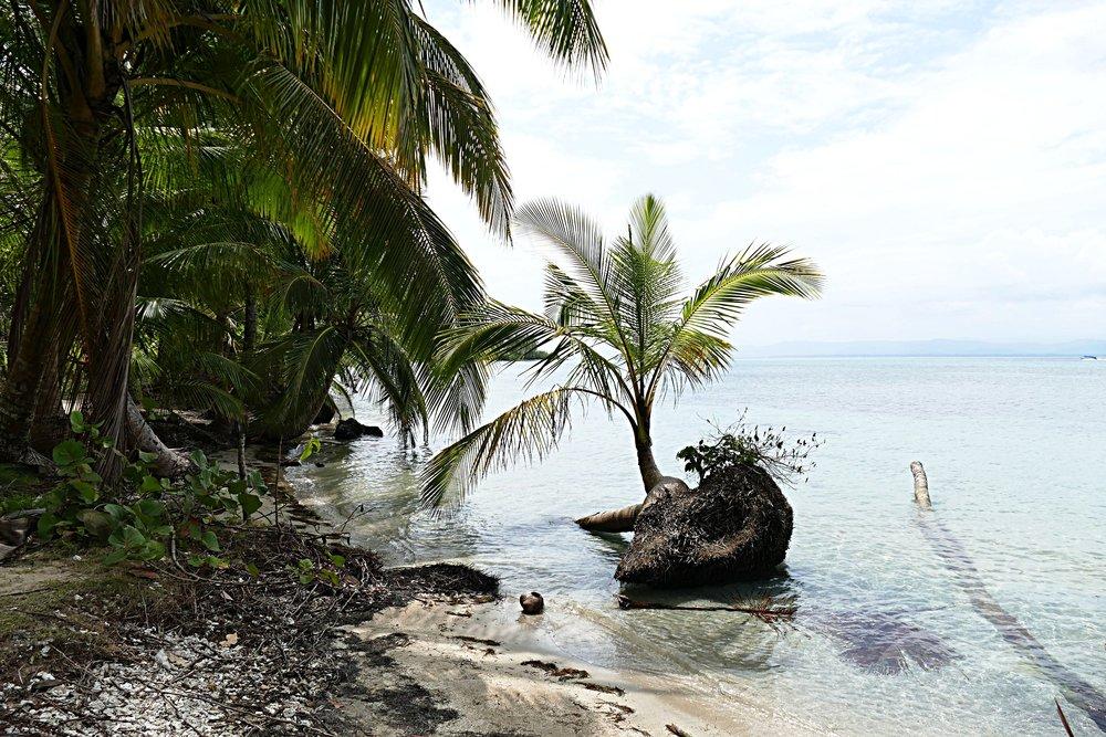 Panama - Playa Estrella (1).jpg